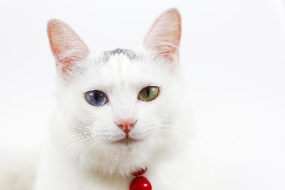 Kočka - zvoneček